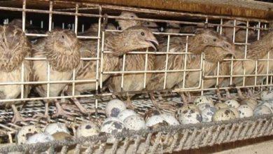 Photo of فرار از بیکاری با کسب درآمد از حیاط ۱۲ متری خانه