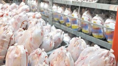 Photo of افزایش قیمت مرغ ناشی از گرانی عوامل تولید است